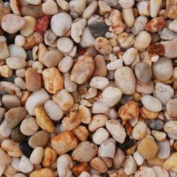 Apricot Chippings